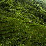 Czy warto jechać do Wietnamu